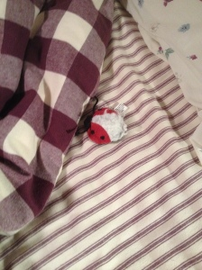 poor dead ladybug