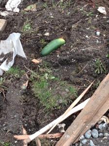 random vegetable
