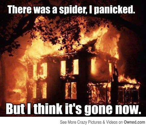 there_was_a_spider_540