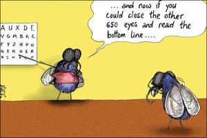 fruit fly 3