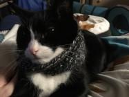 striker scarf 2