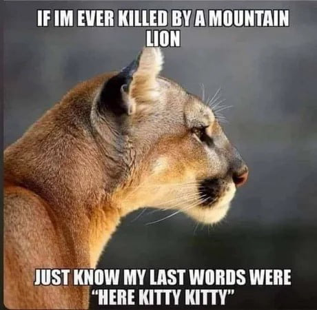 Meme woman cougar 35+ Cougar